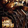 Верблюжьи пауки (Camel Spiders)