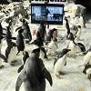 Пингвины мистера Поппера (Mr. Popper