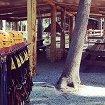 Веревочный парк «Ранчо»
