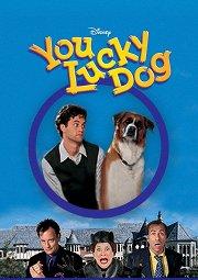 Постер Везучий пес