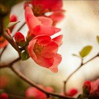 Фото Любовь