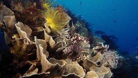 На глубине морской 3D / Under the Sea 3D