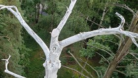 Направо — белый лес
