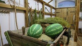 Сельское хозяйство в Сарепте