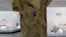 Экспозиция музея природы