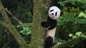 7 фильмов о планете, природе и экологии, которые стоит посмотреть на День Земли