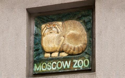 Питомник зоопарка откроется для посетителей, как выглядят карточки для оплаты парковки и другие городские новости