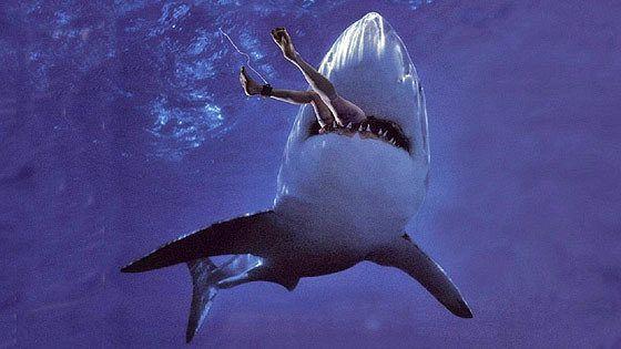 Акула Малибу (Malibu Shark Attack)