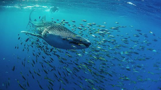 Фестиваль подводной фотографии «Дикий подводный мир»