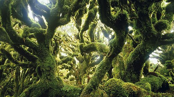 О лесах и людях