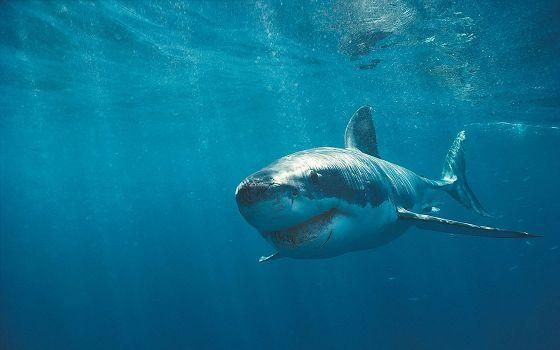 Акулы-3: Мегалодон (Shark Attack 3: Megalodon)