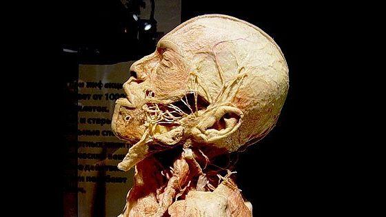 Тело человека. Увидеть, чтобы понять