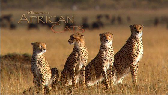 Африканские кошки: Королевство смелых (African Cats)