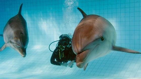 Дельфинарий города Набережные Челны