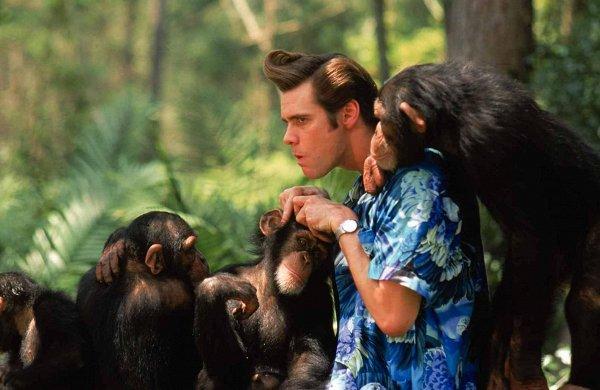 фильмов про животных