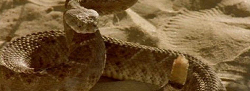 Кино: «Змеиный яд»