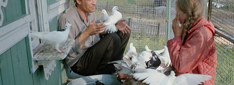Кино: «Любовь и голуби»