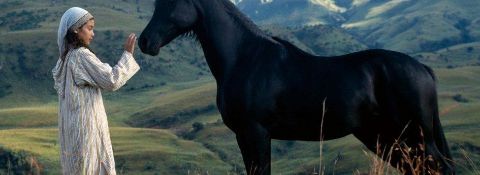 Кино: «Приключения черного скакуна»