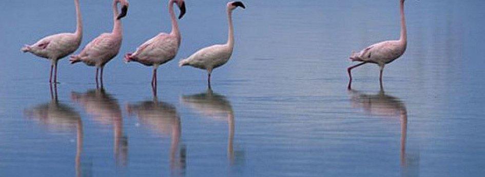 Кино: «Крылья природы»