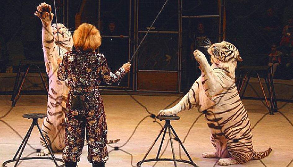Театр: Белые тигры