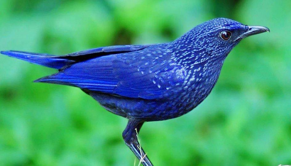 Выставки: Лучшие певчие птицы мира и родного края