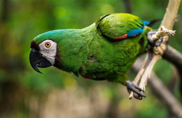 Говорящий попугай спас хозяина отгибели