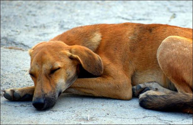 Собак замуровали втеплотрассе, утверждает зоозащитница