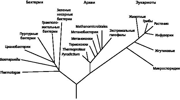 короткометражные концерты майкла джексона