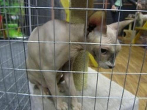 ВРязани закрыли выставку кошек, аживотных разместили накарантин
