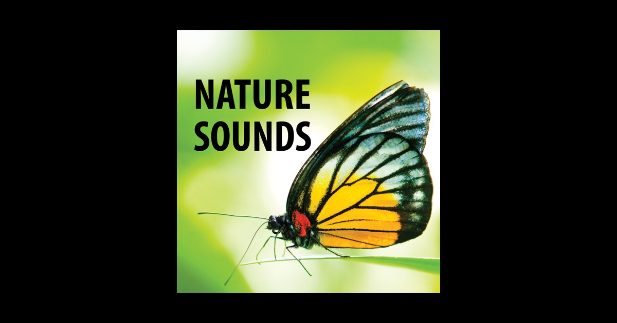 Nature Sounds White Noise for PC - Free download