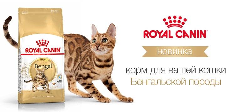 Корм royal canin bengal