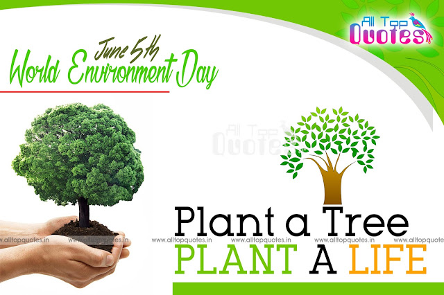 Reasons to Plant More Trees - Essay Examples