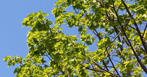 Деревья подзащитой. Рассказываем обозеленении Дорогомилова