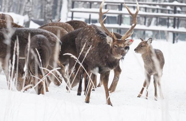 Москвичей призвали кормить животных богатой микроэлементами едой