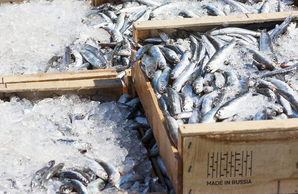 Объем вылова рыбы вРоссии в2020 году ожидается науровне 5млнтонн