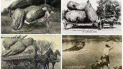 Исторические фото, которые непонять без объяснения